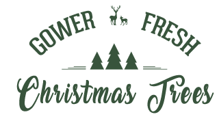 buy Fresh Christmas trees online and wholesale at Gower Fresh Christmas Trees