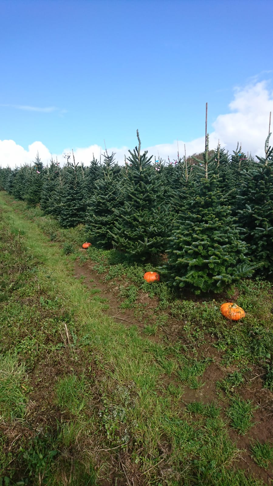 Halloween at Gower Fresh Christmas Trees