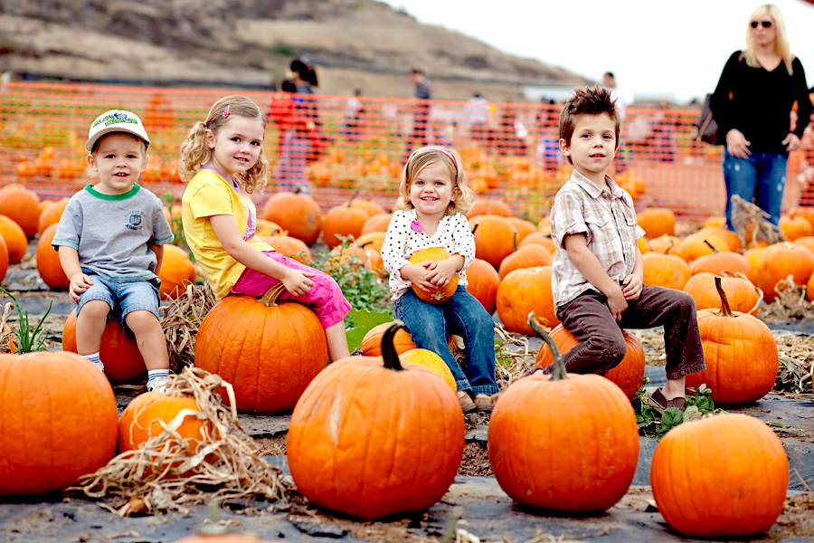 Halloween Pumpkin Party at Gower Fresh Christmas Trees
