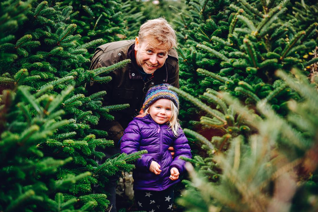 pick you own fresh Christmas tree from Gower Fresh Christmas trees
