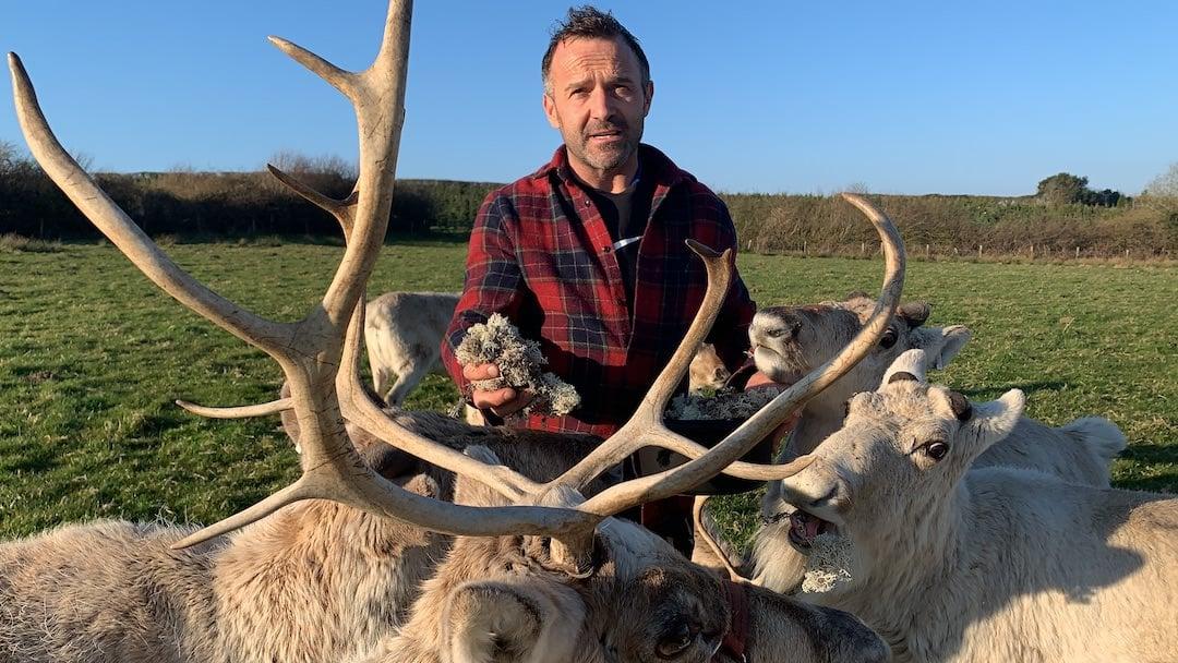 Robert Morgan feeding the reindeer