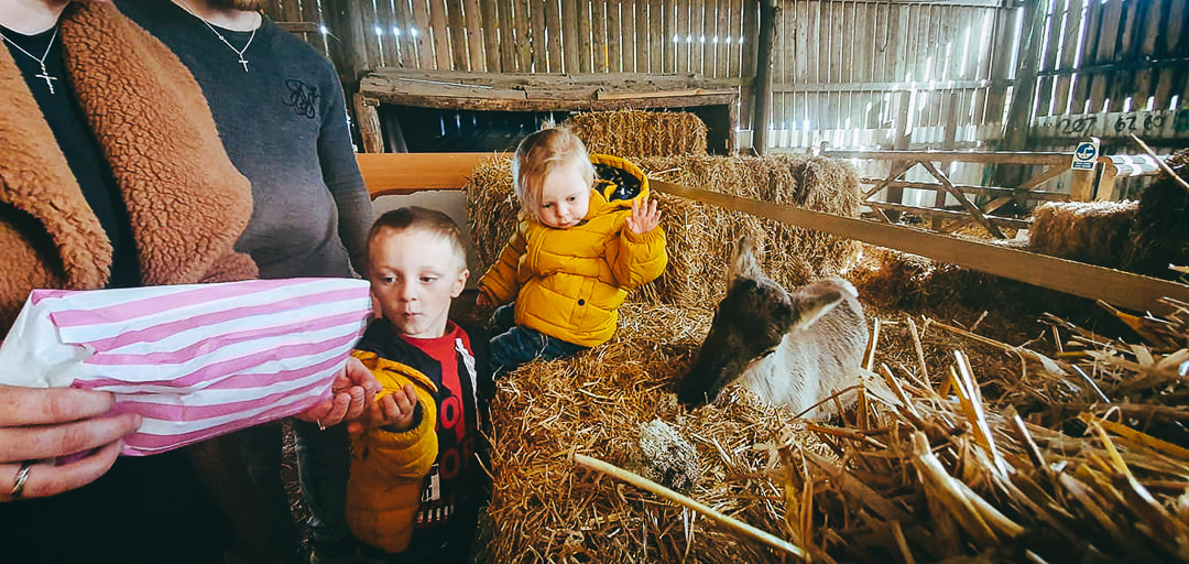 Pick Your Own Gower Pumpkin-children feeding the reindeer