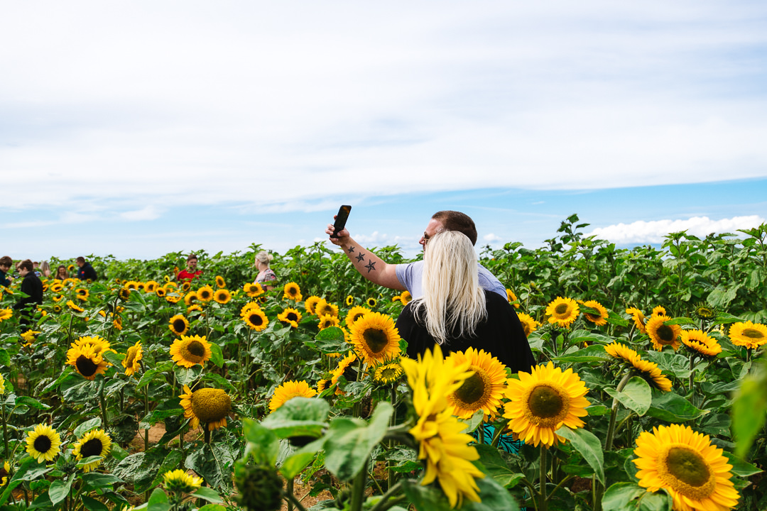 Rhossili Sunflowers-Gower Fresh Christmas Trees-17