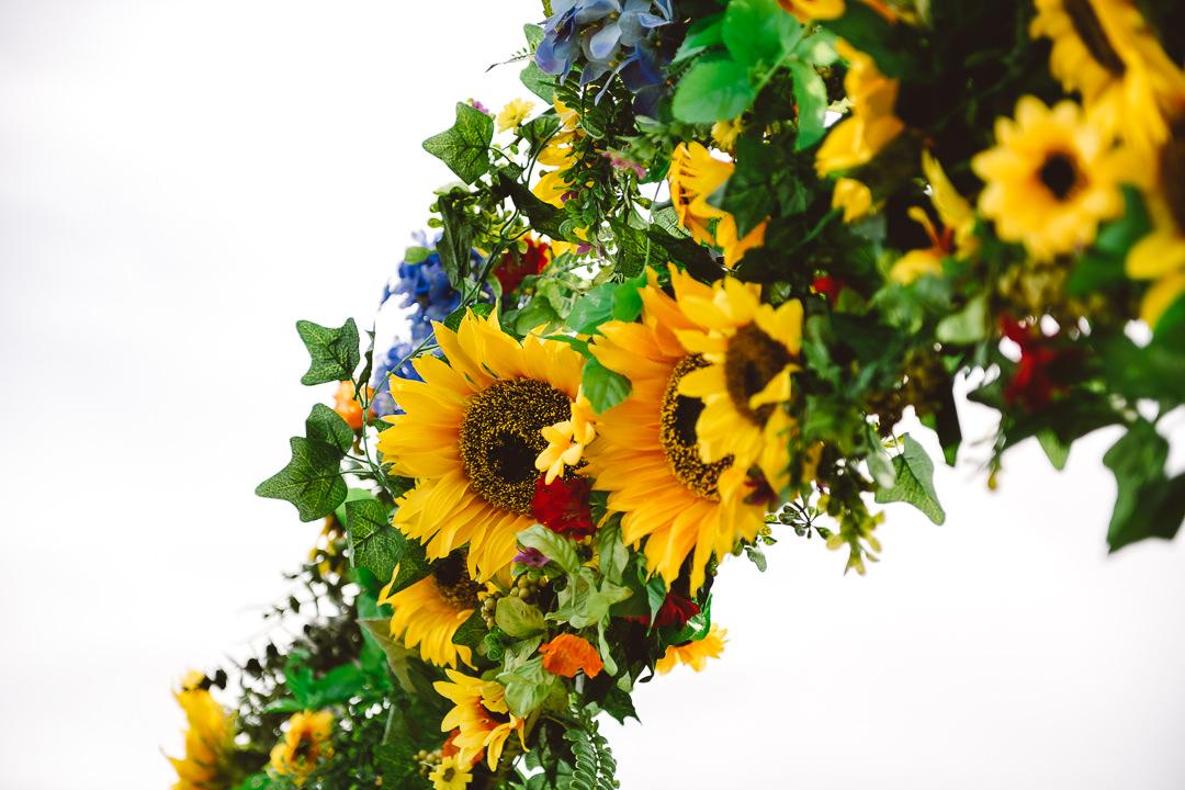 Rhossili Sunflowers-Gower Fresh Christmas Trees-4
