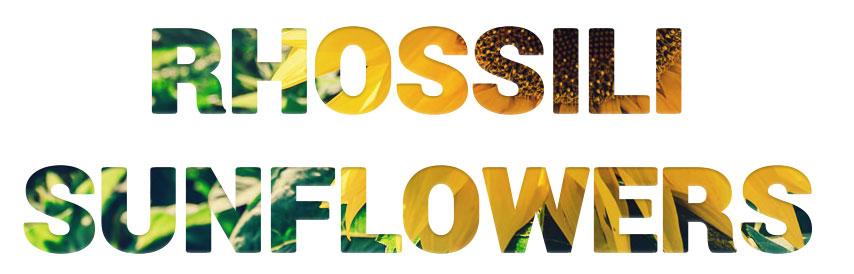 Rhossili Sunflowers fields